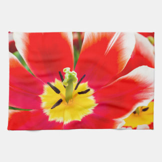 Red white tulip in field of tulips tea towel