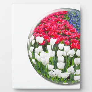 Red white tulips and blue grape hyacinths display plaques