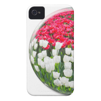 Red white tulips and blue grape hyacinths iPhone 4 Case-Mate cases