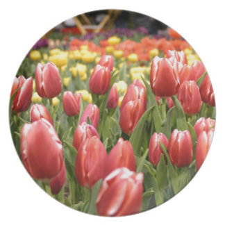Red White Tulips Plates