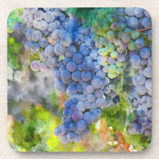 Red Wine Grapes in the Vineyard Coaster
