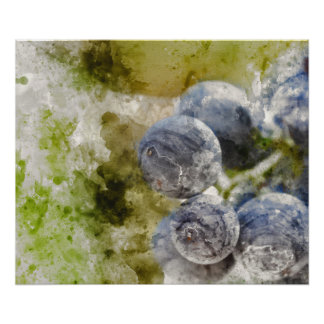 Red Wine Grapes in the Vineyard Poster