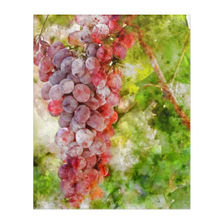Red Wine Grapes on the Vine Acrylic Print