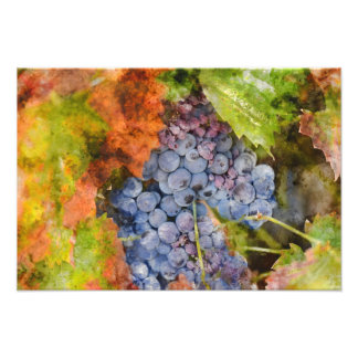Red Wine Grapes on the Vine Photo Print