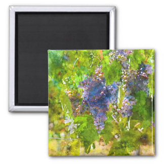 Red Wine Grapes on the Vine Square Magnet