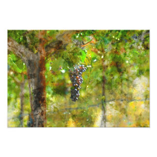 Red Wine Grapes on Vine Art Photo