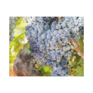 Red Wine Grapes on Vine Canvas Print