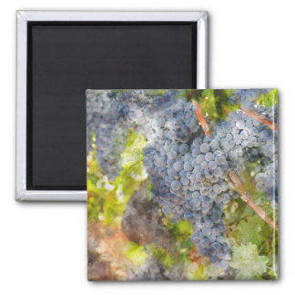 Red Wine Grapes on Vine Magnet