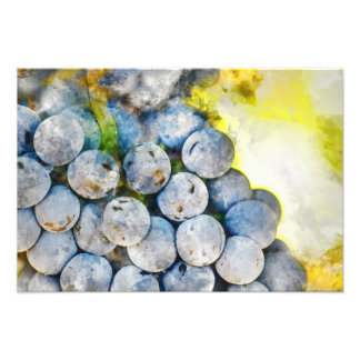 Red Wine Grapes on Vine Photo Print