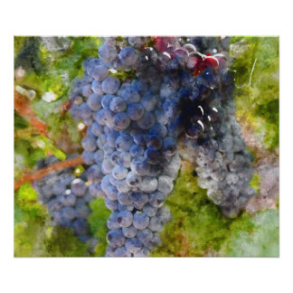 Red Wine Grapes on Vine Poster
