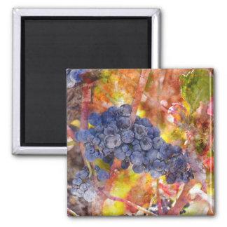 Red Wine Grapes on Vine Square Magnet