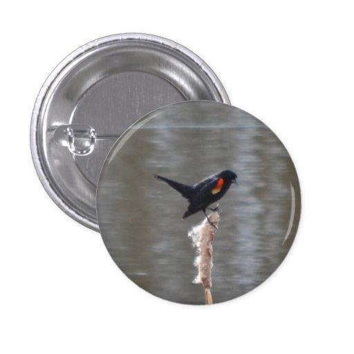 Red Wing Black Bird Button