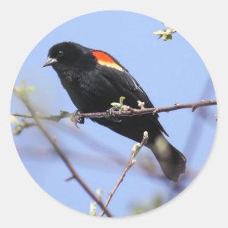 Red-winged Blackbird Classic Round Sticker