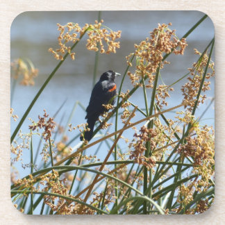 Red-winged blackbird coasters