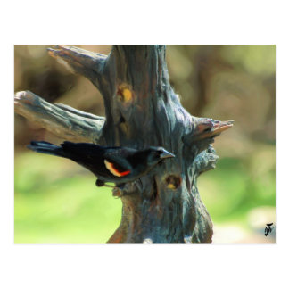 Red Winged Blackbird Postcard