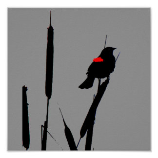 Red-winged Blackbird Poster