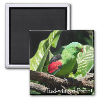 Red-winged Parrot on Tree Limb Square Magnet