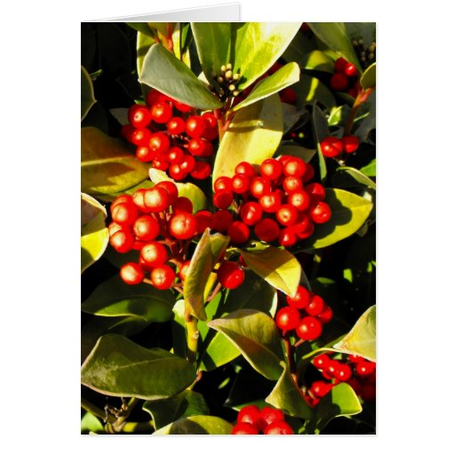 Red winter berries in Jersey Cards