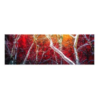 Red winter night photo print
