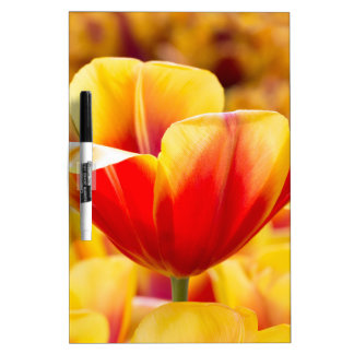 Red with yellow tulip in flowers field dry erase board
