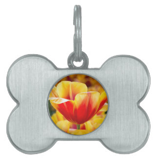 Red with yellow tulip in flowers field pet name tag