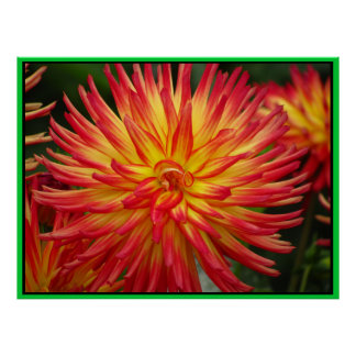 Red Yellow Dahlia Flower Posters