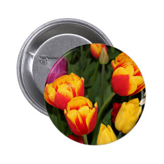 Red yellow Tulip flowers in bloom 6 Pinback Buttons