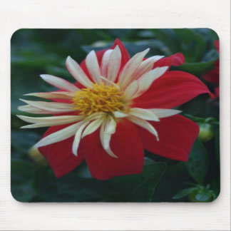 Red Zinnia Flower blossom Mouse Pads