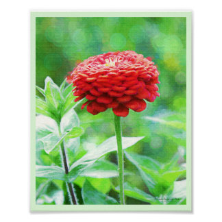 Red Zinnia Flower Poster