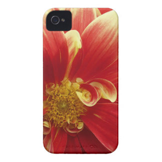 Red Zinnia iPhone 4/4S Case & Credit Card Holder