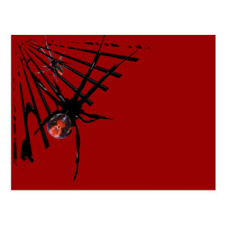 Redback Spider Post Card