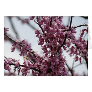 Redbud Blossoms Rejoicing Spring Card