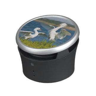Reddish Egret (Egretta Rufescens) Adult Feeding Speaker