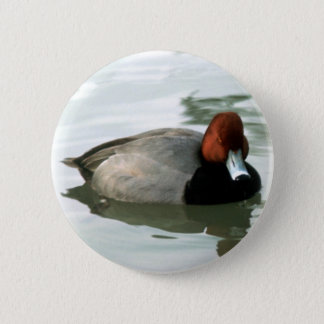 Redhead Drake (untitled) 6 Cm Round Badge