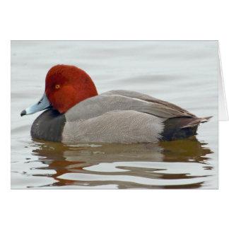 Redhead Duck Drake Card