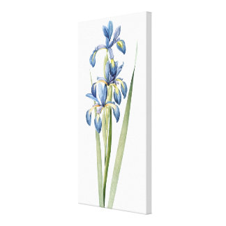 Redoute Iris Flowers Wrapped Canvas Print