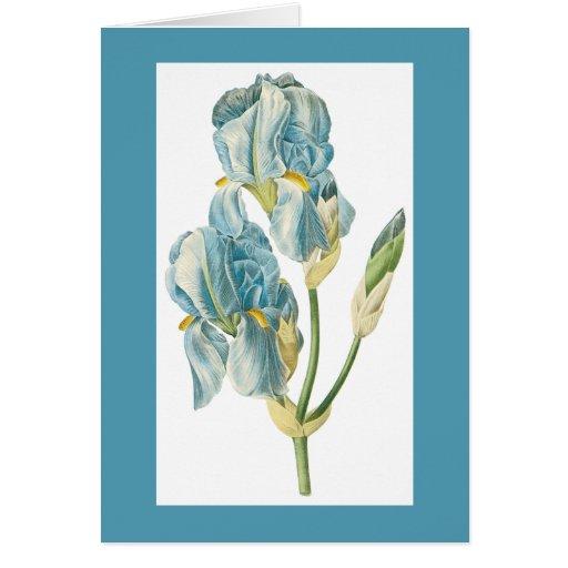 Redoute Iris Notecard Greeting Card