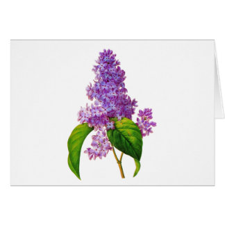 Redoute Lilacs Card