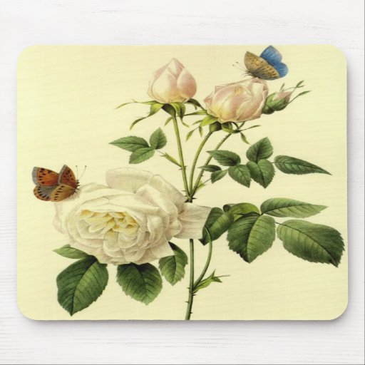 Redoute Print: 'Bengal Rose Hymanee' Mouse Pads