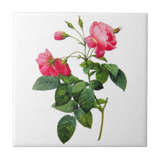 Redoute Roses Small Square Tile