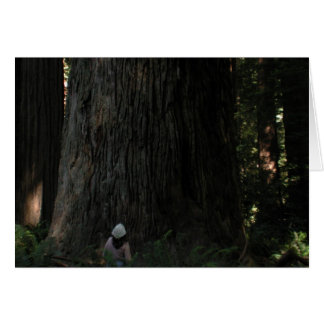 Redwood Forest Card