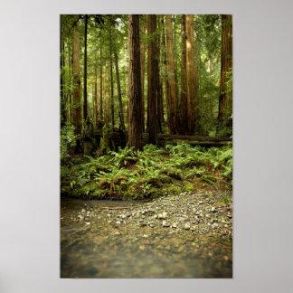 Redwood Forest Glen Poster