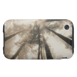 Redwood Forest, Northern California Tough iPhone 3 Covers