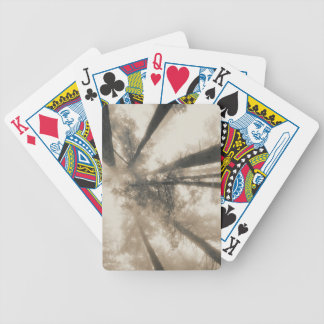Redwood Forest, Northern California Card Deck