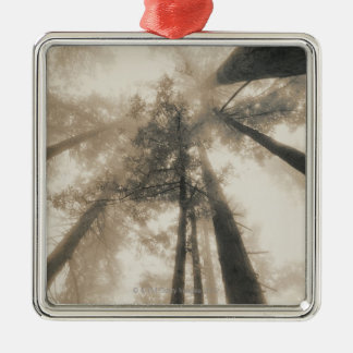 Redwood Forest, Northern California Silver-Colored Square Decoration