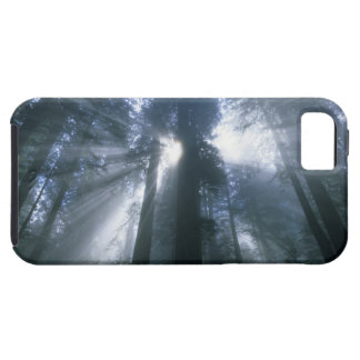 Redwood National Park, Del Norte County, foggy iPhone 5 Cases
