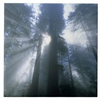 Redwood National Park, Del Norte County, foggy Large Square Tile