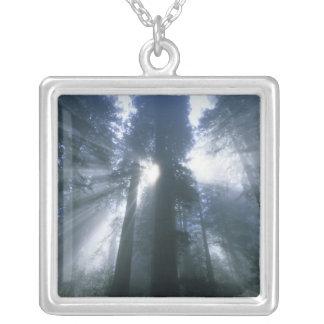 Redwood National Park, Del Norte County, foggy Square Pendant Necklace