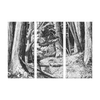 Redwood park canvas print