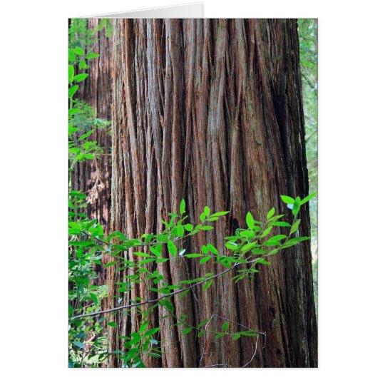 Redwood Tree Card